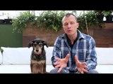 Pet na Pan #11 - Cinco dicas para evitar que seu pet sofra com barulho