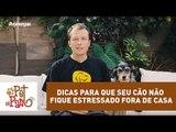 Pet Na Pan #33 - Três dicas para que seu cão não fique estressado fora de casa