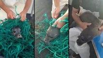 Des pêcheurs libèrent un petit phoque pris au piège dans un filet