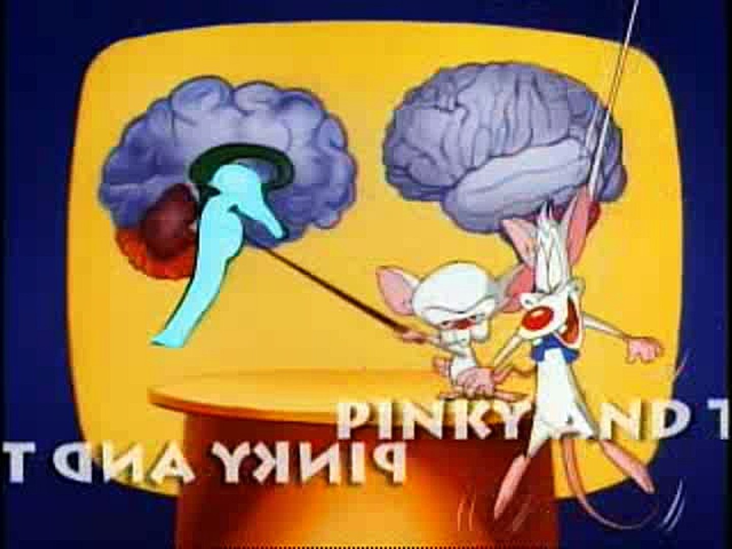 Pinky And The Brain - S1e18 E19 - The Third Mouse, The Visit