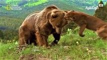 Wild Animal Attacks - Craziest Animal Fights Caught On Camera