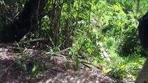 Guyanese Hunting Pt3, Red-Rumped Agouti aka AKURI.