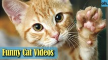 Cat Videos - Funny Cats - Funny Cat Videos - Kitten Videos - Funny Kitty Videos - Cats For Pets - P1
