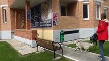 ВЛОГ собака сибирская хаски САЛОН КРАСОТЫ ДЛЯ ЖИВОТНЫХ Хаски ТВ