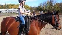 Cheval lire équitation Saut de cours 23-26 desc