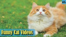 Cat Videos - Funny Cats - Funny Cat Videos - Kitten Videos - Funny Kitty Videos - Cats For Pets - P3