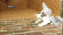La peur donne des ailes a un chat tombé dans un trou