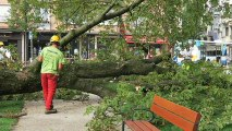 Haute-Savoie : Chute d'un arbre en plein centre-ville d'Annecy