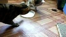 Dix Nouveau chats voleurs amusant chat ep loser Novembre 2016