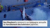 Sea Shepherd renonce à sa traque annuelle des baleiniers japonais
