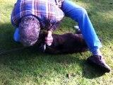 Un chien sauvé par un massage cardiaque donné par un étranger !
