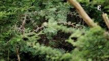 Grandeurs Nature - Les hors-la-loi de la nature survivre