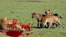 Most Amazing Wild Animal Attacks,Lion, Tiger, Leopard,Cheetah,Wild Dog ,Hyena