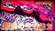 不死身のがん幹細胞とは?~NHKサイエンスZERO~