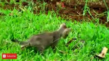 The Best Attacks Of Wild Animals Cat Vs Snake Fight to the Death