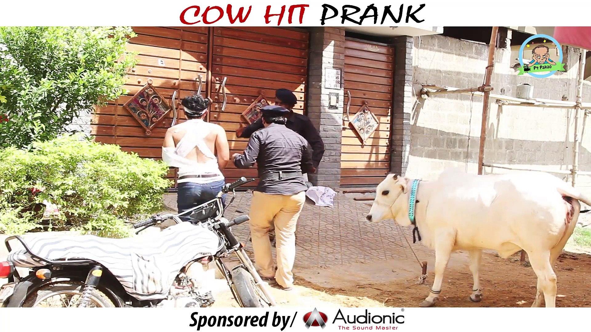 COW HIT PRANK - By Nadir Ali In P4 Pakao 2017