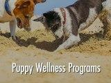 Puppy Wellness Programs - Portage Park Animal Hospital & Dental Clinic
