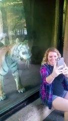 La réaction de cette tigresse devant une femme enceinte est incroyable !