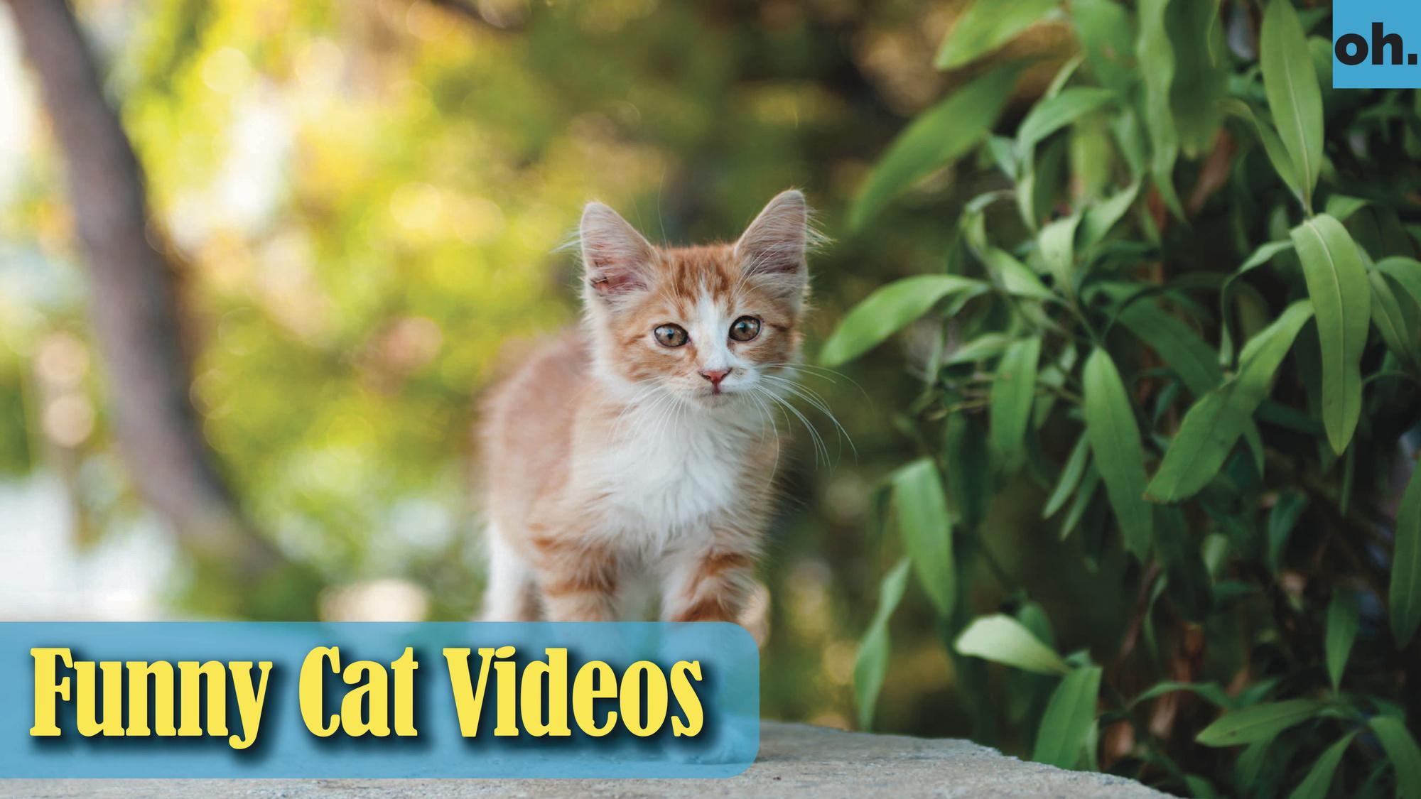 Cat Videos – Funny Cats – Funny Cat Videos – Kitten Videos – Funny Kitty Videos – Cats For Pets – P7