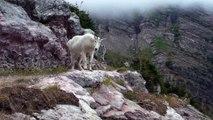Des randonneurs bloqués par une chèvre des montagnes vraiment pas sympa... Tu ne passeras pas!!!