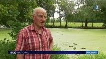 Rennes : la pollution d'une rivière par Lactalis tue des tonnes de poissons
