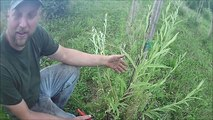 Our Method to grow willow  trees