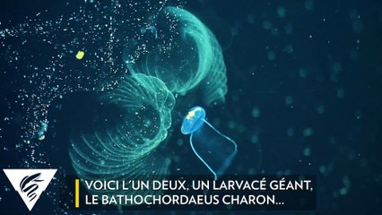 L'ingestion des microplastiques sous l'océan