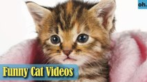 Cat Videos - Funny Cats - Funny Cat Videos - Kitten Videos - Funny Kitty Videos - Cats For Pets - P9