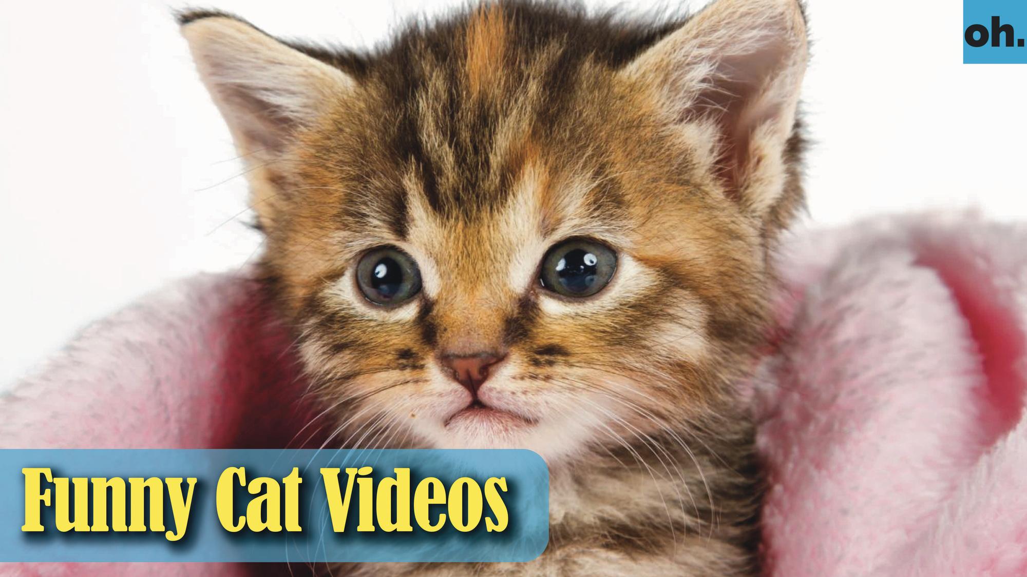 Cat Videos – Funny Cats – Funny Cat Videos – Kitten Videos – Funny Kitty Videos – Cats For Pets – P9