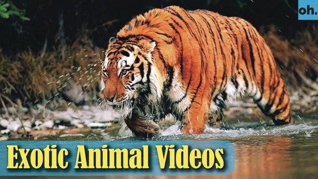 Animal Video - Wild Animals - Rainforest  Animals - Rare Animals Zoo - Exotic Animals For Sale P5