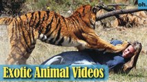 Animal Video - Endangered Animals - Extinct Animals - Rare Animals Zoo - Exotic Animals For Sale P3