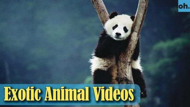Animal Video - Wild Animals - Rainforest  Animals - Rare Animals Zoo - Exotic Animals For Sale P4