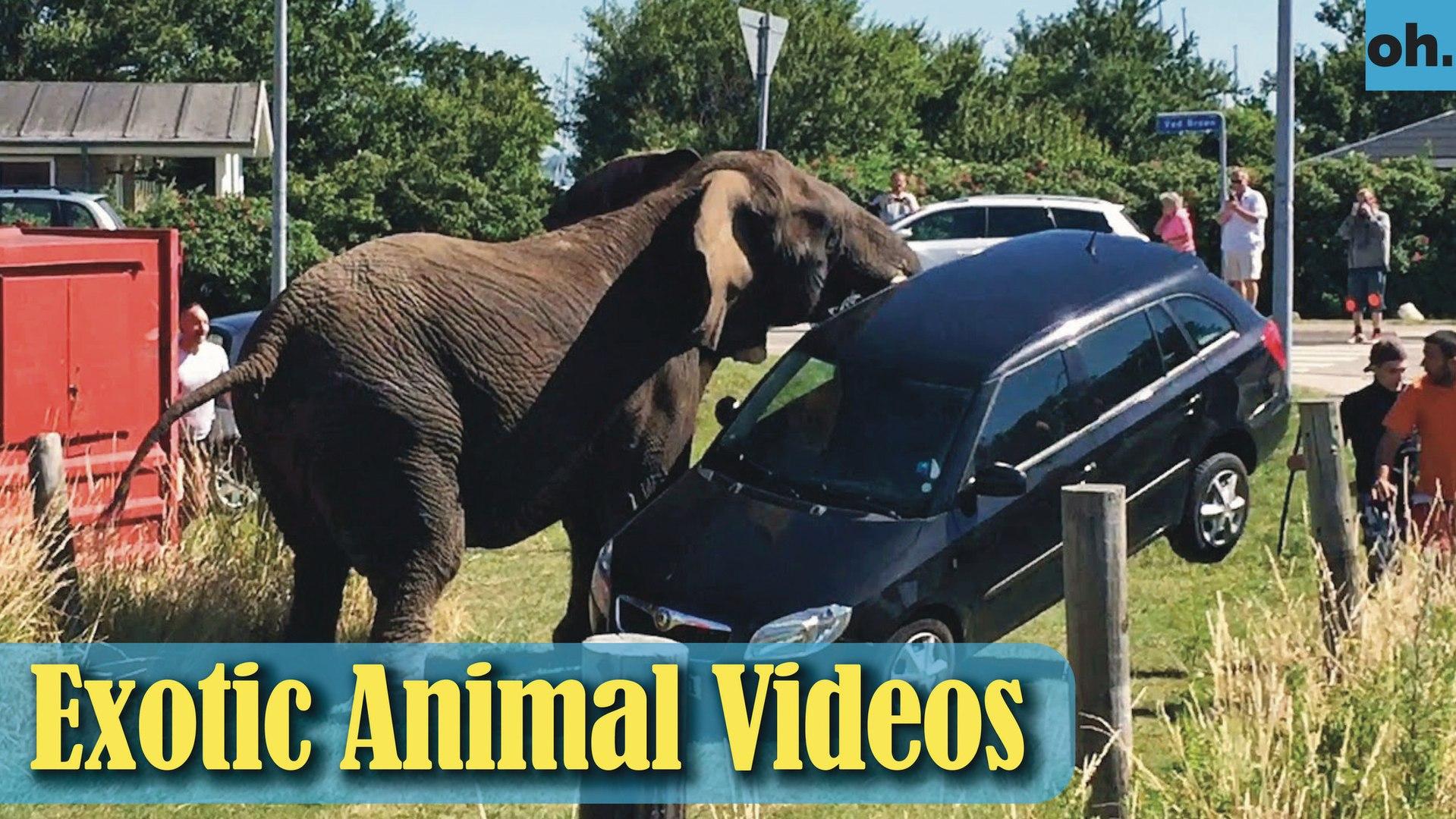 Animal Video - Wild Animals - Rainforest  Animals - Rare Animals Zoo - Exotic Animals For Sale P3