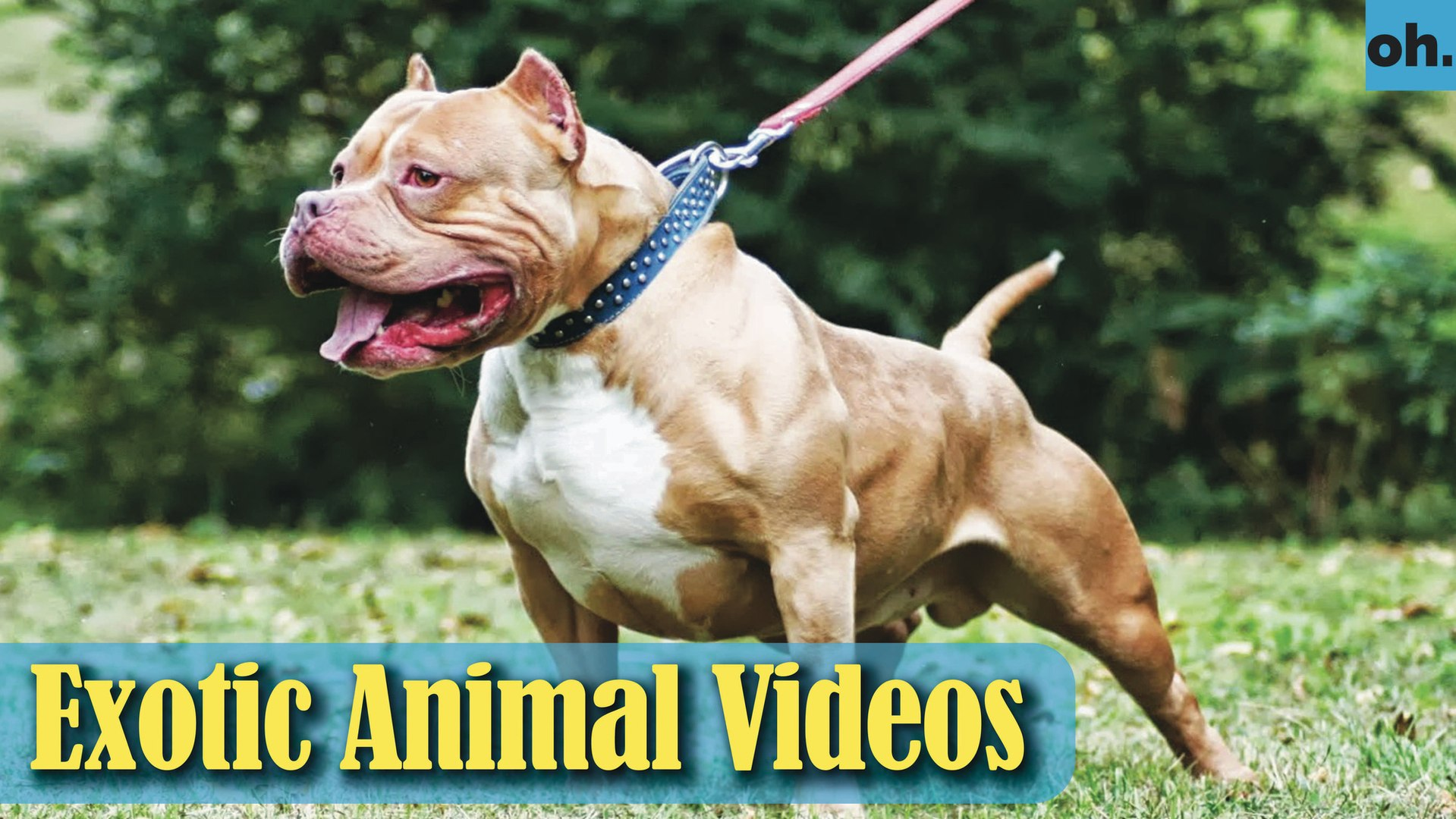 Animal Video - Endangered Animals - Extinct Animals - Rare Animals Zoo - Exotic Animals For Sale P4