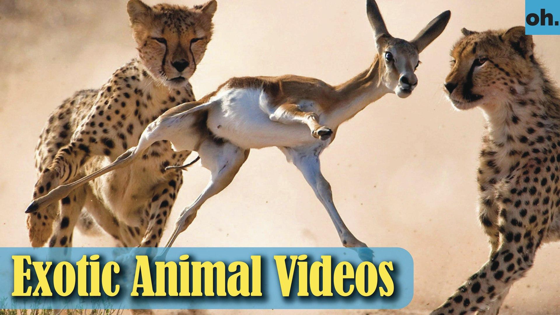 Animal Video - Endangered Animals - Extinct Animals - Rare Animals Zoo - Exotic Animals For Sale P2