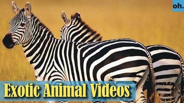 Animal Video - Wild Animals - Rainforest  Animals - Rare Animals Zoo - Exotic Animals For Sale P1