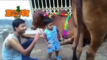 Animal Voice 8 Bakra Eid Punjabi Totay Funny Tezabi Totay 2017