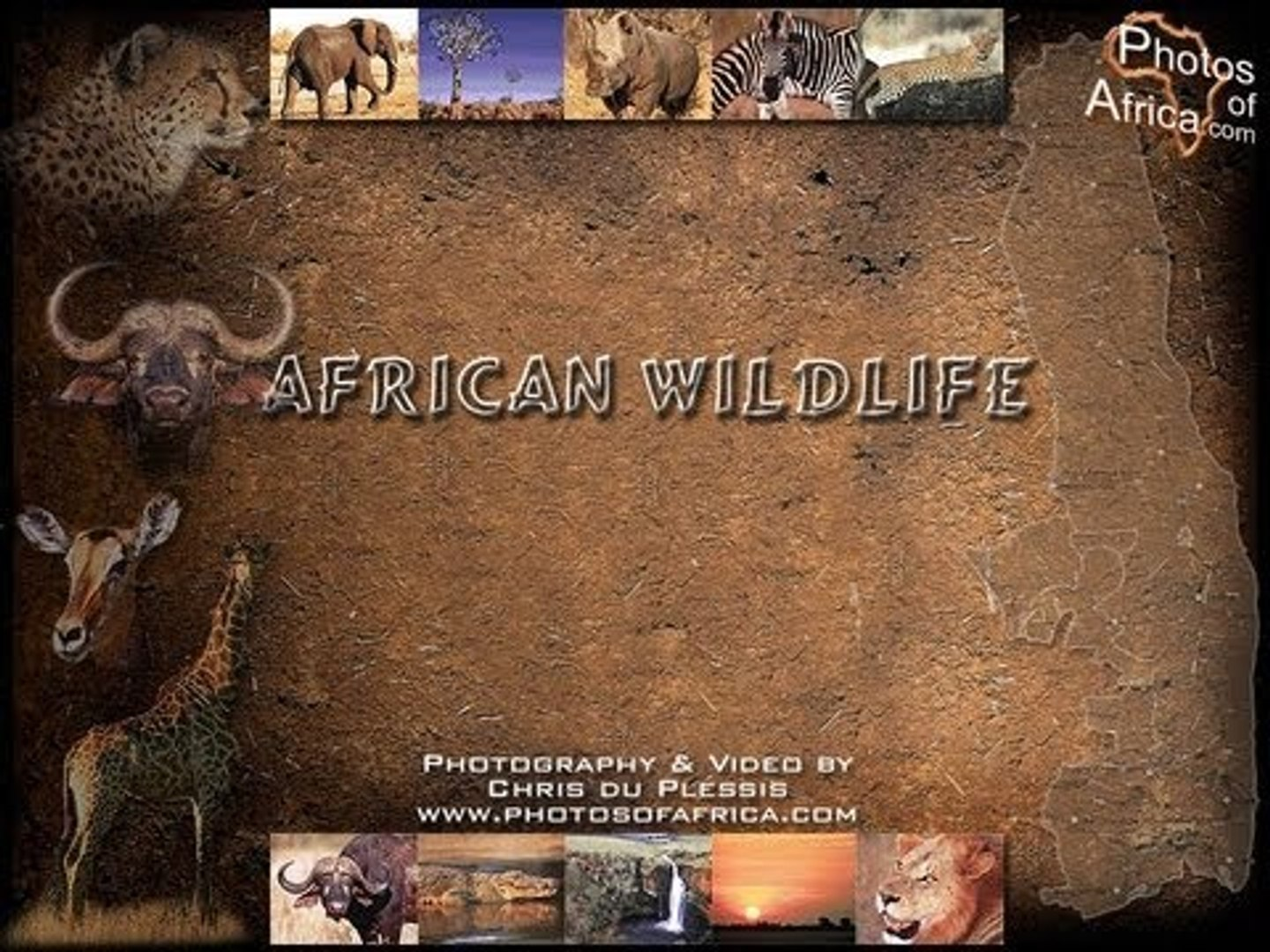 Sounds of the African Bushveld - AFRICAN WILDLIFE