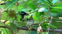 Beautiful wild birds: The parent birds feeding their young birds #1