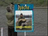 Sandres & Brochets