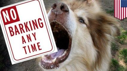 หมาเห่ากวนเพื่อนบ้าน ศาลสั่งผ่าตัดกำจัดสายเสียง