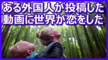 海外の反応 海外絶賛「日本に恋する気持ちも分かる!」 外国人夫婦が幼い娘を連れて日本を満喫
