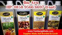 CALL 0858 9566 6697 (I-sat) Produsen Madu Hutan Asli Yogyakarta