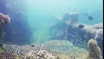 Moreton Island Snorkeling Tour | Moreton Island 4WD ECO Tour | Moreton IslandActivities Australia