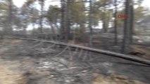 Bolu'da 2 Gün Süren Orman Yangınında 100 Hektar Kül Oldu