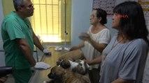 Muğla Marmaris'te Üç Yavru Köpeğe İşkence Yapan Asker Gözaltına Alındı