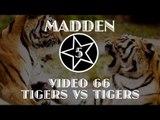 NCAA 14 ONLINE RANKED MATCH - TIGERS VS TIGERS VS TIGERS VS TIGERS