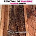Il trouve un essaim d'abeille gigantesque dans un mur de sa maison et décide de le retirer