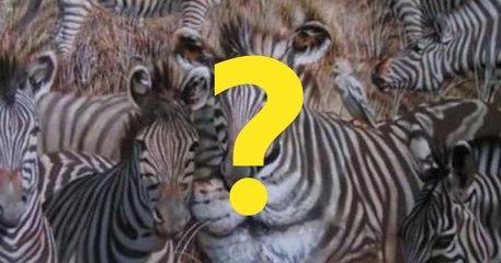 TEST LIČNOSTI: Životinja koju ste prvu ugledali - Lav