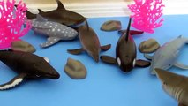 Mer animaux requins